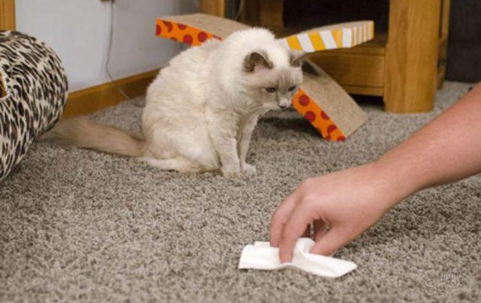 Как избавиться от кошачьего запаха дома